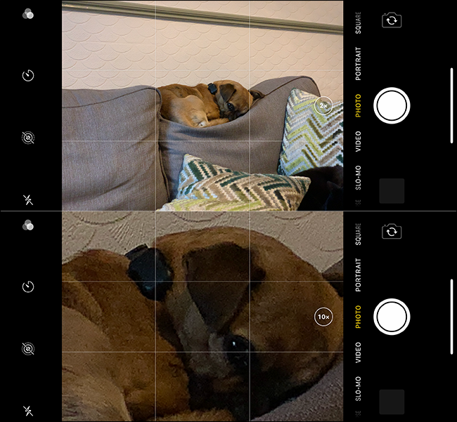 Beispiel eines schlechten Zoombildes eines Hundes auf einem iPhone.