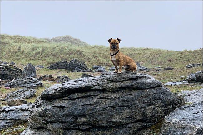 den Hund auf einen Felsen schlagen