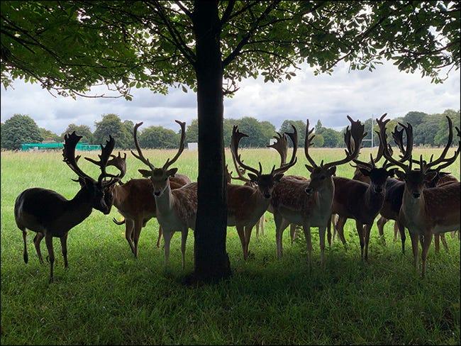 Eine Gruppe von Hirschen unter einem Baum in einer verpassten Exposition.
