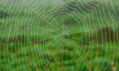 Halten Webserver jeweils nur eine Website?